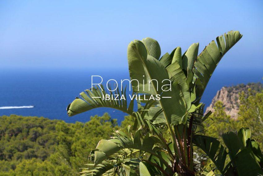 solyluna ibiza-sea view banana tree 035