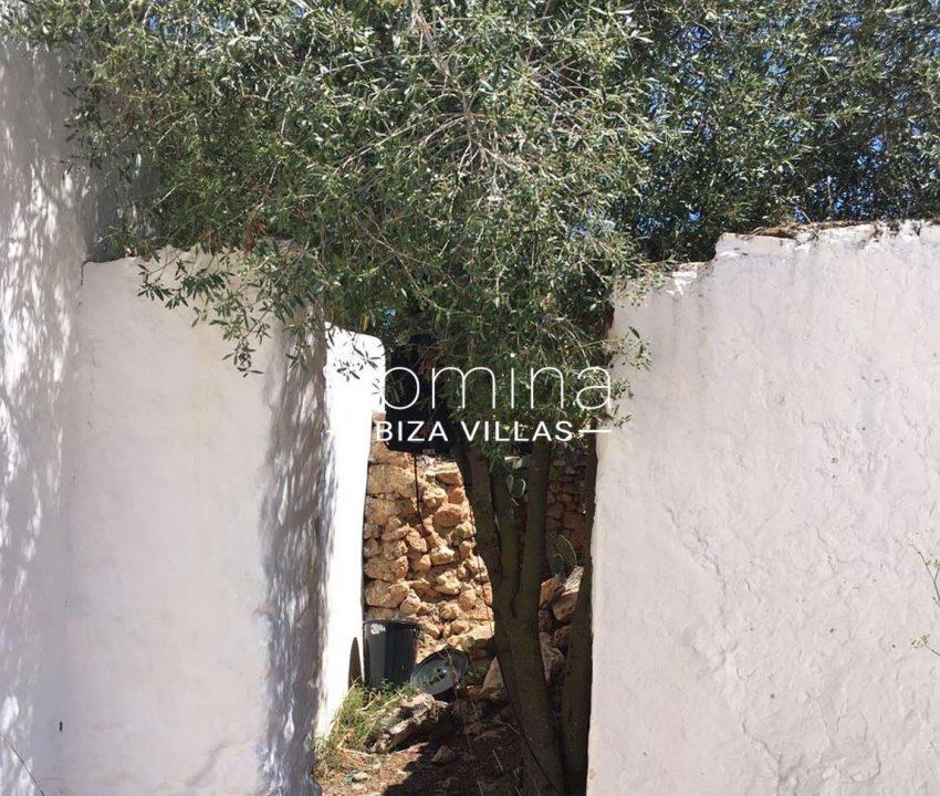 finca antigua ibiza-2patio tree