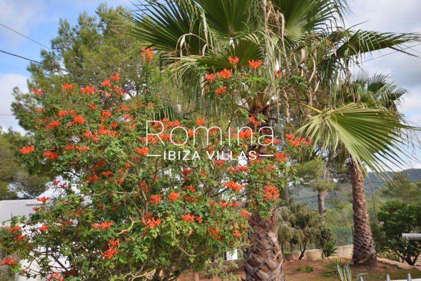 villa colinas ibiza-2garden tree