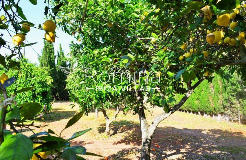 villa elora ibiza-2lemon trees