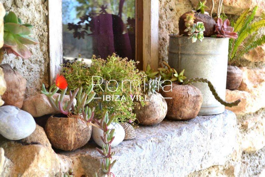 can higuera ibiza-plants