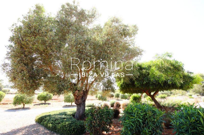 finca dos palmeras ibiza-2garden treesx