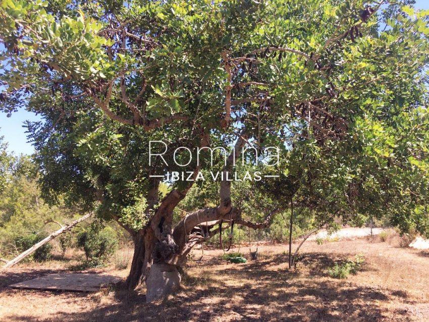 can micalet ibiza-2garden tree