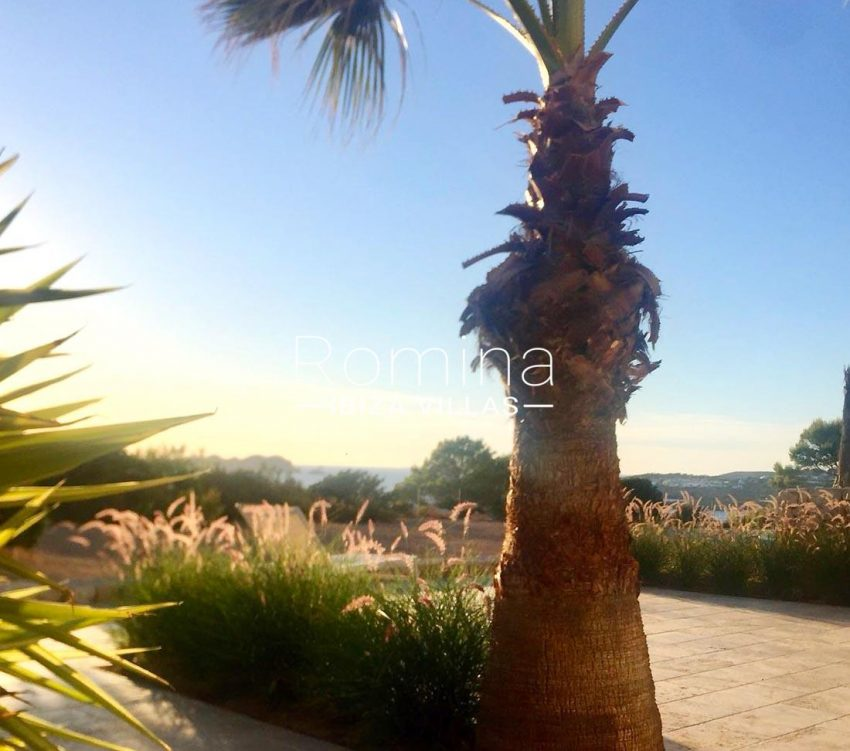 adosado sunset ibiza-2washingtonia