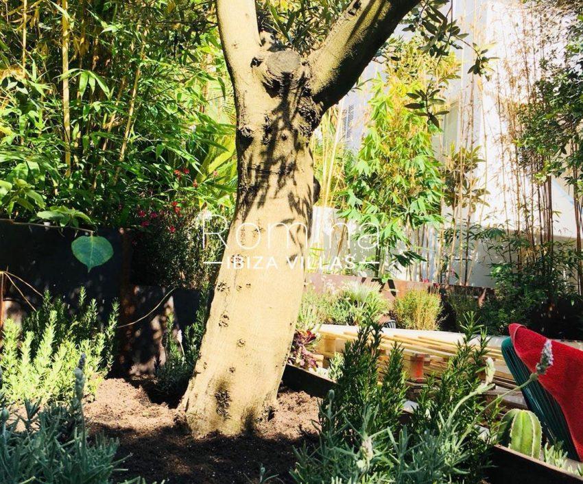 apto jardin ciudad-2garden tree