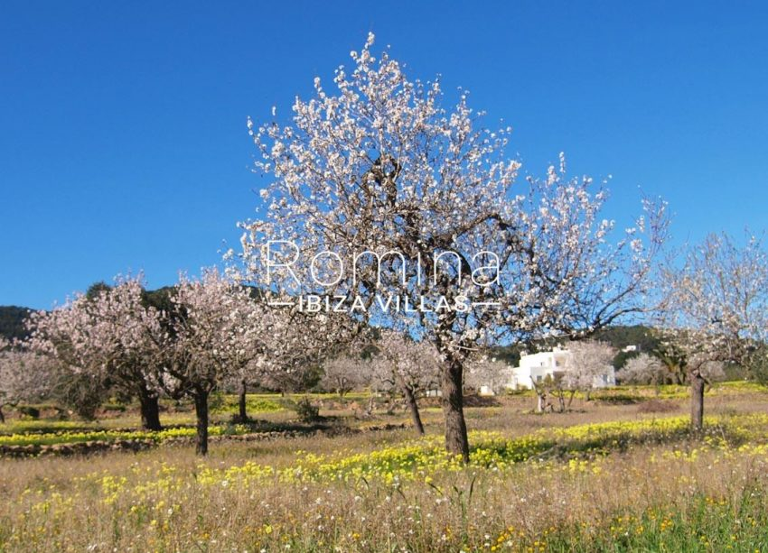 casa pouas ibiza-2almond trees