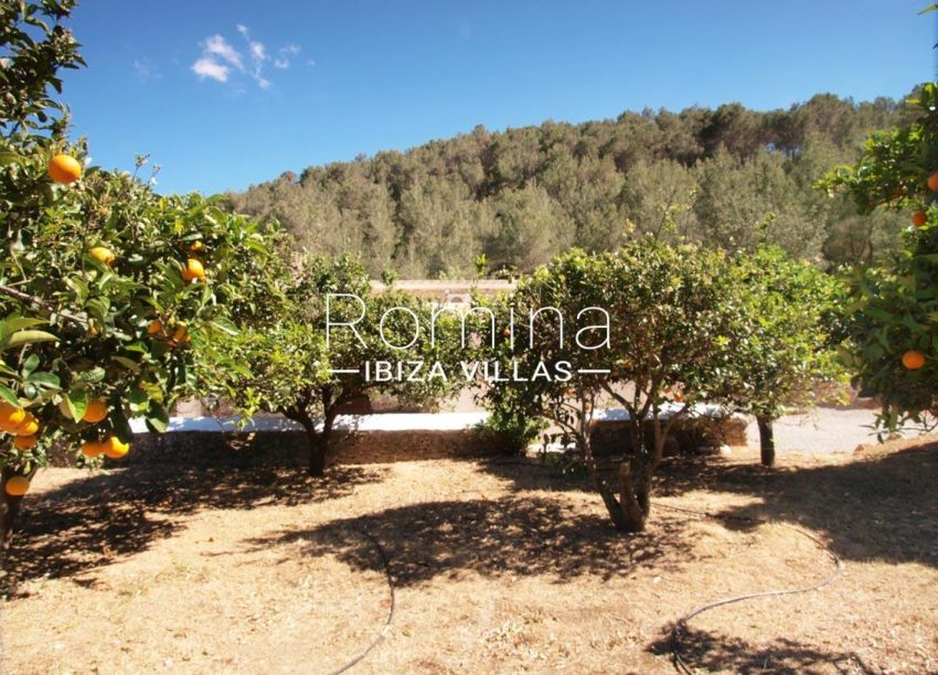 casa vergel ibiza-2orange trees