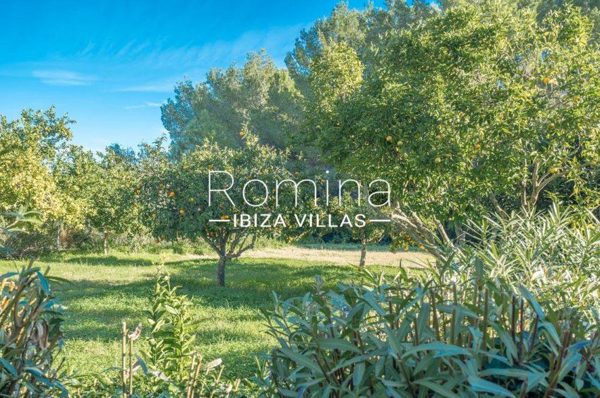 casa danny ibiza-2garden orange trees