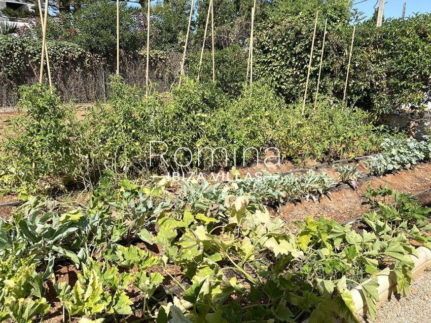romina-ibiza-villas-rv-755-81-villa-yanam-2vegetable garden
