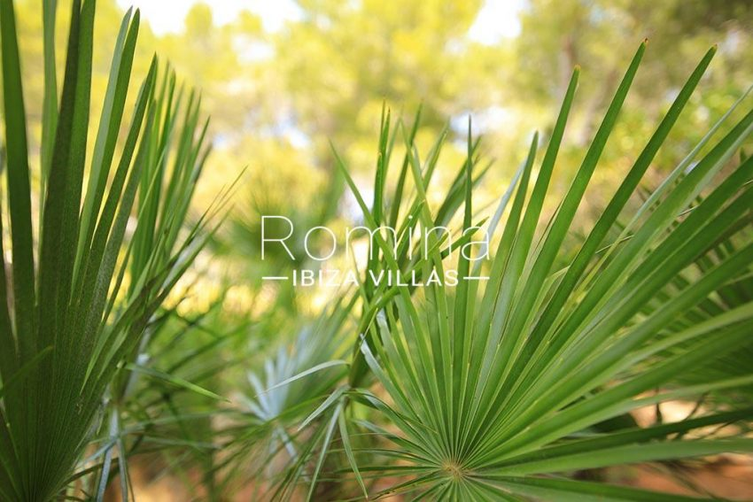 romina-ibiza-villas-rv-893-81-villa-mimosa-2palm leaves